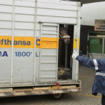 Hactl handles largest-ever horse charter