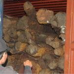BOC seizes Mangkono logs for export to Japan