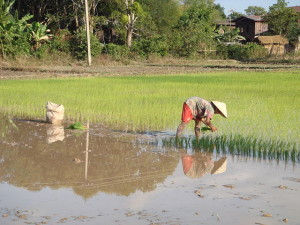 640px-Rice_planting