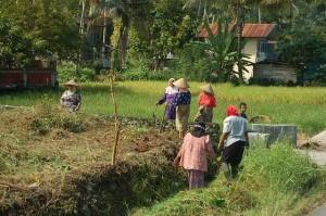 Farmland Malaysia
